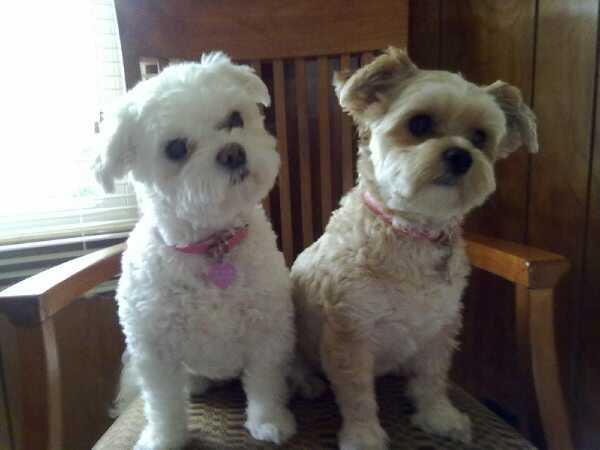 Lola and pyper